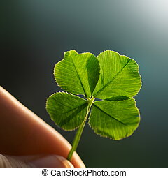 Hand holding a four leaf clover on the ground