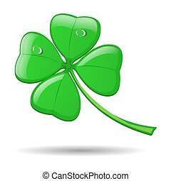 Four leaf clover isolated on white for St. Patrick's day