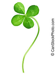 Four Leaf Clover isolated on white