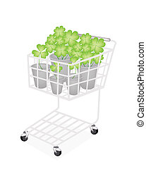 Four Leaf Clovers in A Shopping Cart