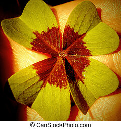 Four Leaf Clover,shamrock