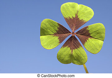 Four Leave Clover - Four leave clover with blue background...