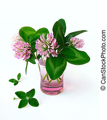 Four leaved clover and clover flowers isolated on white background