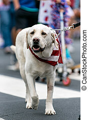Patriotic white Labrador dog dressed in red white and blue bandana while celebrating 4th July holiday on city street.