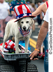 Patriotic white Labrador dog dressed in red white and blue top hat and bandana while celebrating 4th July holiday on city street.