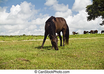 A beautiful horse grazing on the side of a hill.