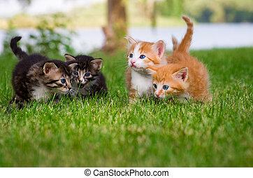 Four little kittens in garden - Four little kittens playing...