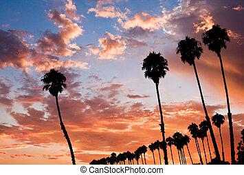 Four Palm Sunset