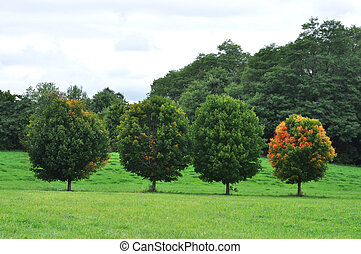 Four perfect trees - Bright red autumn leaves light up one...