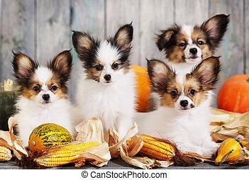 Four puppy with pumpkin