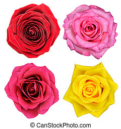 Four Rose Flowers Isolated on White
