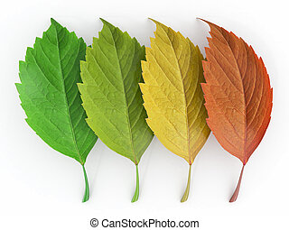 Four season.  Green, red and yeloow leaf. 3d