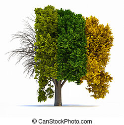 Four seasons - Conceptual tree in four seasons - 3d render...