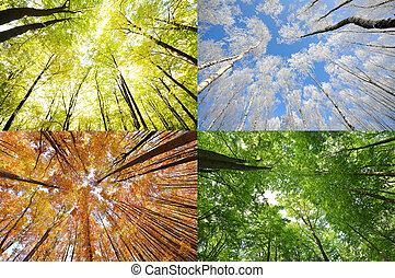 Four seasons in the forest