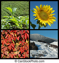 Four seasons - nature collage