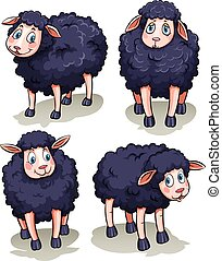 Four sheeps - Four black sheeps on a white background