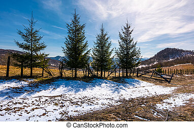 four spruce trees near the fence in mountains