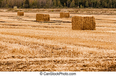 Four square hay bales on empty yellow field