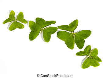 Four Three Leaf Clovers on White Background