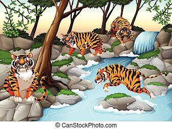 Four tigers living by the river