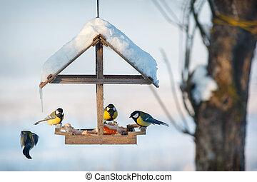 Four tit in winter bird feeder