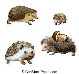 Four-toed Hedgehogs, Atelerix albiventris, 3 weeks old, ...
