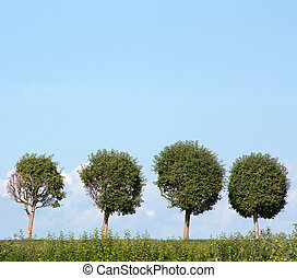 Four trees in row