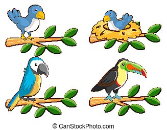 Four types of birds on the branch