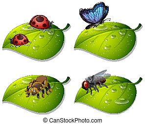 Four types of insects on green leaves