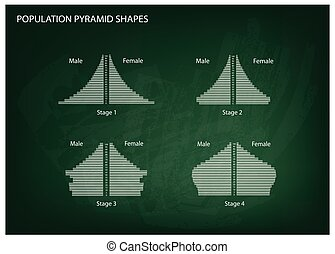 Four Types of Population Pyramids o