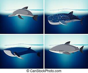 Four types of wildlife in the ocean