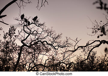 Four vultures perched in a tree