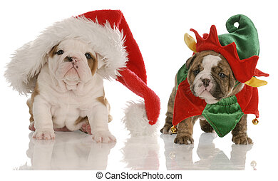 four week old english bulldog puppies dressed up as santa and an elf