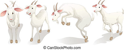 Four white goats - Illustration of the four white goats on a...