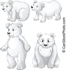 Four white polar bears - Illustration of the four white...