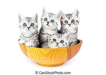 Four young cats sitting in wooden bowl on white