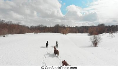 Four young horses running on a snowy ground. Aerial view....