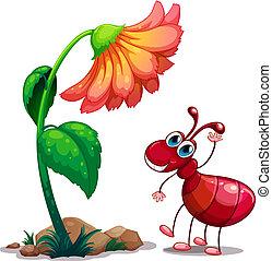 fourmi, à côté de, géant, fleur, rouges
