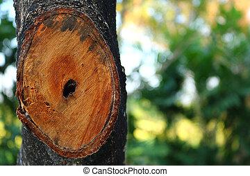 fourmi, arbre, creux