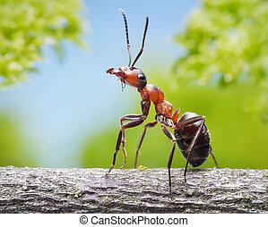 fourmi, gracieux, branche