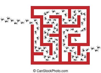 fourmi, p, casse-pieds, labyrinthe, infestation, problème