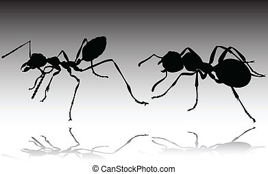fourmi, silhouettes, vecteur