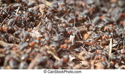 fourmis, nid, bâtiment