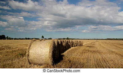 Fourteen Piled Hay Stacks in a Row
