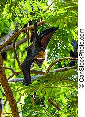 fox), chauve-souris, arbre, (flying, pendre