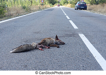 Fox died on the road,