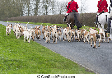 Fox Hunt - horses and hounds back view