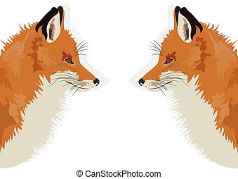 Fox on white background reflected