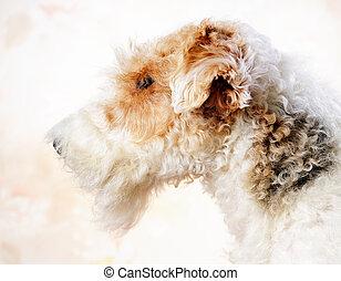 Fox terrier portrait - Studio fox terrier portrait over...