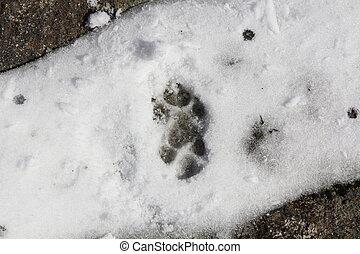 fox tracks in the snow